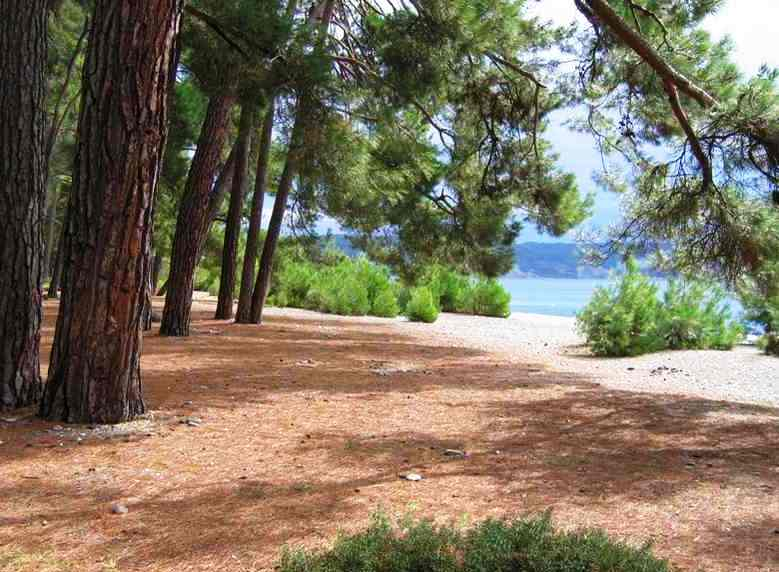 Абхазия пляжа и набережной 5