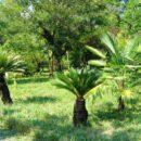 Сухумский ботанический сад (Абхазия)