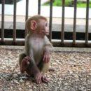 Сухумский обезьяний питомник (Абхазия)