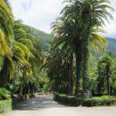 Приморский парк Гагры (Абхазия)