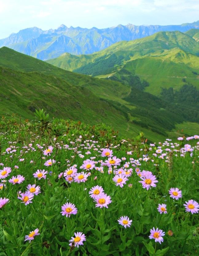 начала необходимо альпийские луга в абхазии фото или напишу ваш