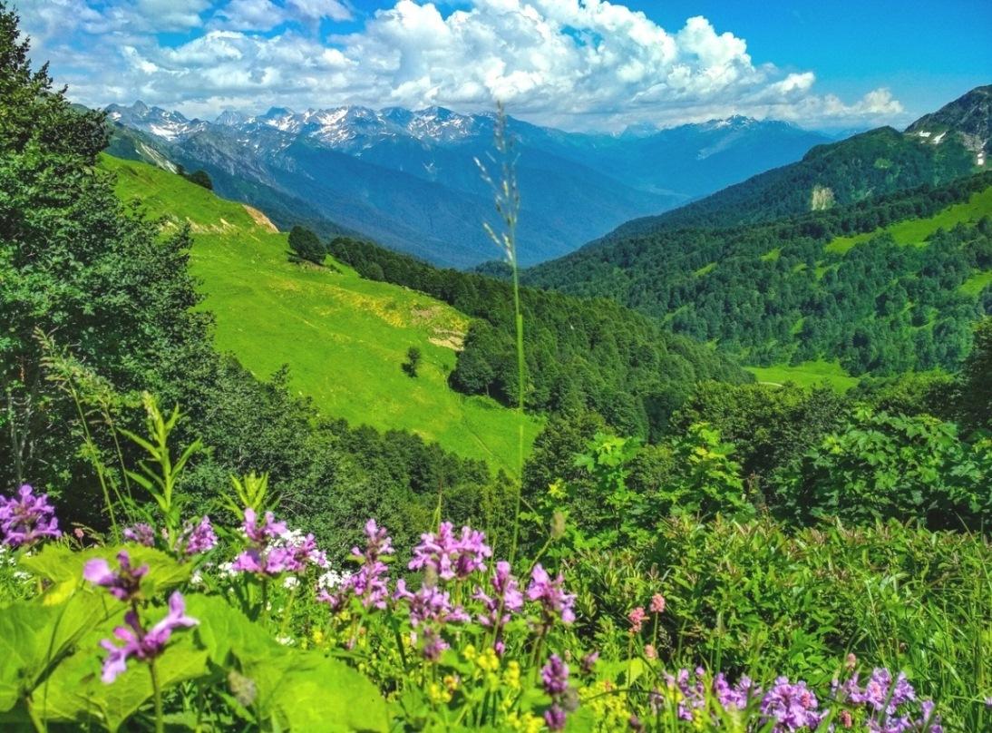 место пленочной альпийские луга в абхазии фото время модной