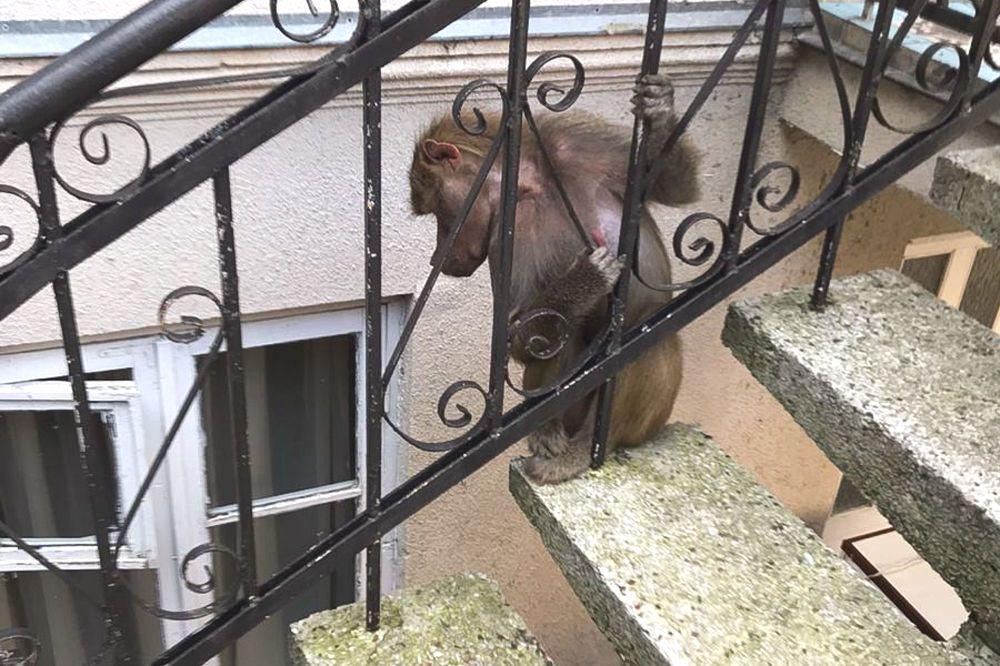 В Абхазии из Сухумского питомника сбежали обезьяны