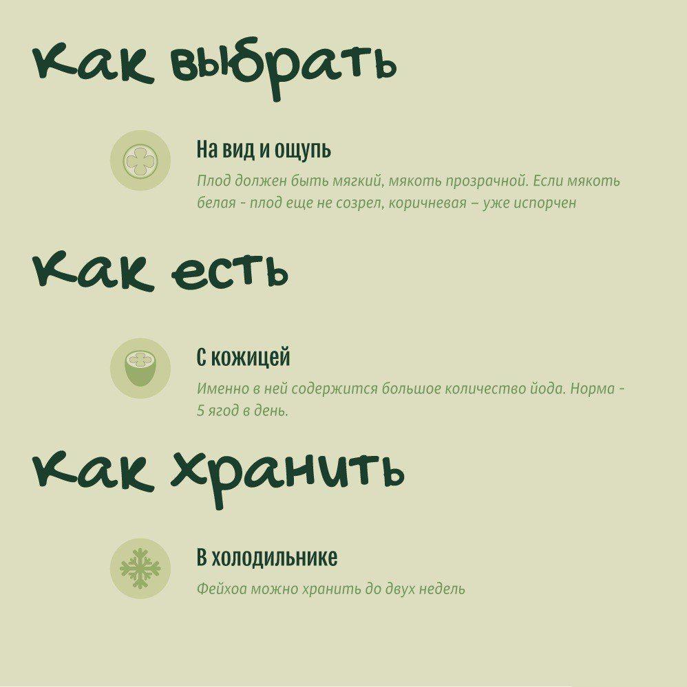 Познавательная информация о фейхоа из Абхазии