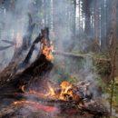Фотографии лесных пожаров в Абхазии в начале 2021 года