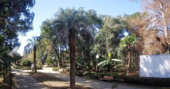 Вебкамера в парке Нового Афона